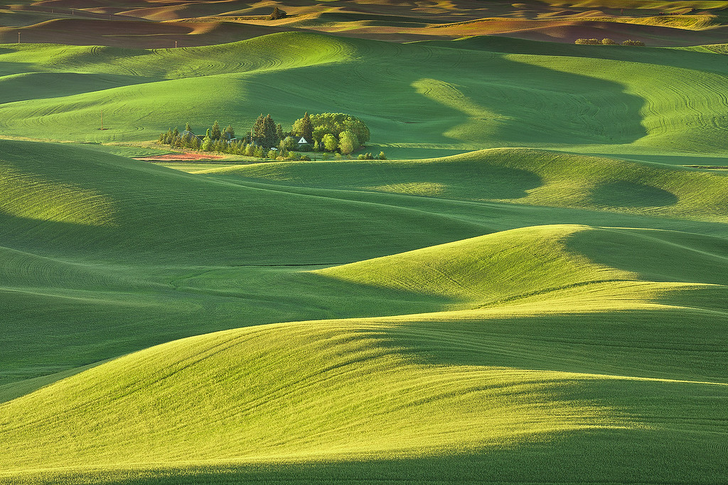 Soft morning light in the Palouse