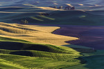 The Palouse : New Work from the incredible Palouse region in Washington State.