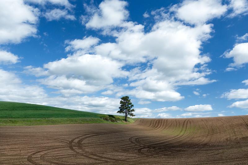 """Tree and Sky"""