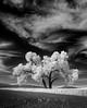 """Lone Tree #1"""