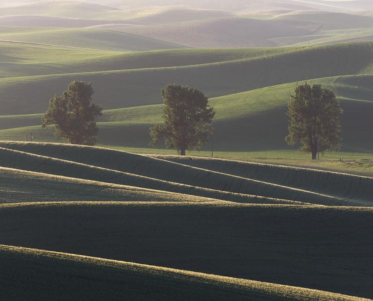 """Sunrise at the Three Trees"""