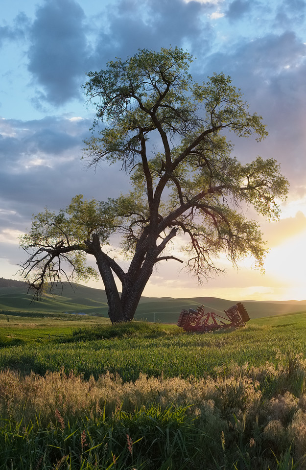 """Cottonwood Sunset"""
