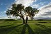 """Tree of Life"""
