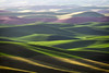 The Palouse : Incredible rolling hills of the Palouse, Eastern Washington.