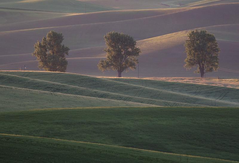 """""""Three Trees Sunrise"""""""