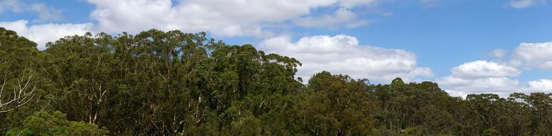 Tree top at Lane Cove National Park