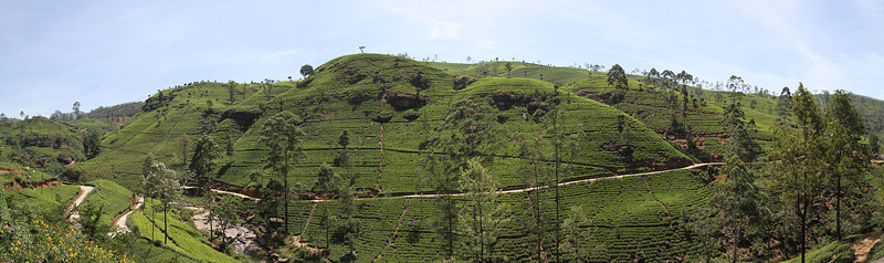 Macwoods tea plantation in  Nawra Eliya, Sri Lanka
