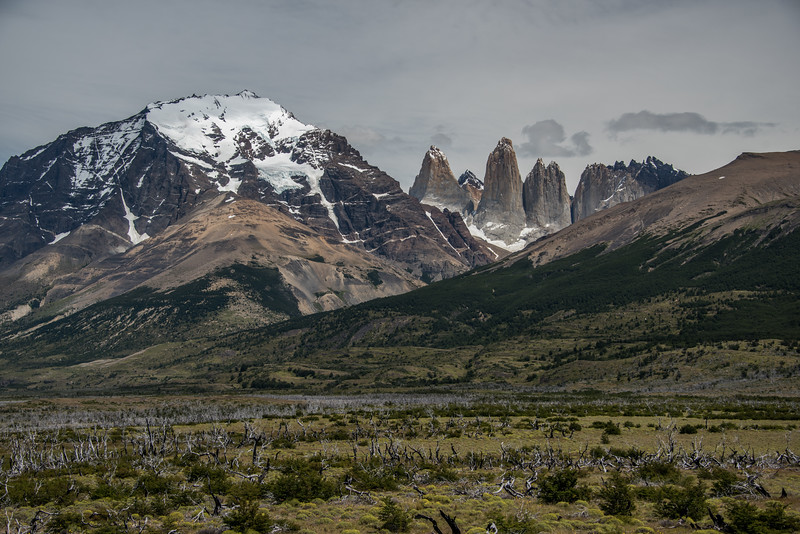 Forest Past - Torres del Paine, Chile