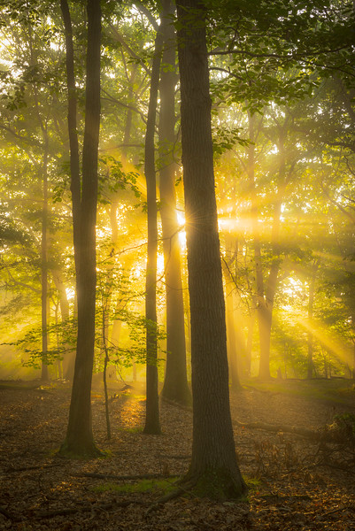"""Dances with Rays"" - North Park, PA   Recommended Print sizes*:  4x6  