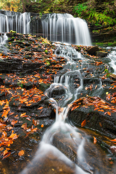 """""""Trickle Down"""" - Ricketts Glen State Park   Recommended Print sizes*:  4x6  