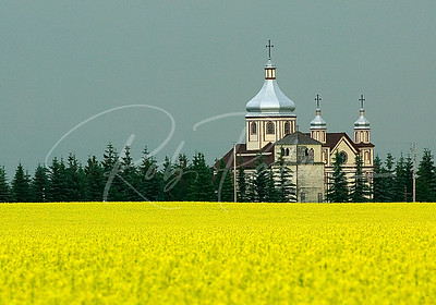 Church and Canola Field, Alberta, Canada