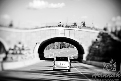 Wildlife overpass/underpass at Banff National Park in Alberta, Canada ... Shot with the Lensbaby Composer Pro with edge 80 optic  © Copyright Hannah Pastrana Prieto