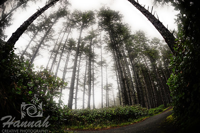 Foggy trail at Cape Lookout State Park in the Oregon Coast  © Copyright Hannah Pastrana Prieto