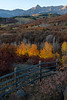 """Aspens on Fire"""