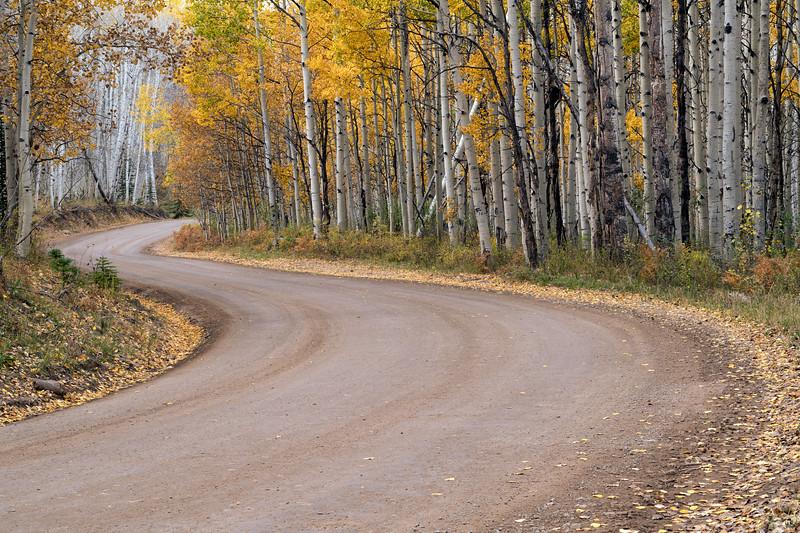"""""""Aspen Road"""""""