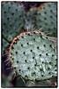 Cactus details, Saguaro NP West, Tucson, Az