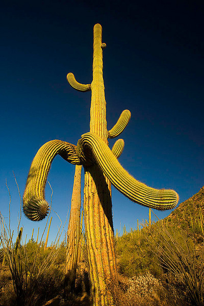 Saguaro National Park<br /> Tucson, Arizona