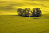 """Yellow Sea""<br /> <br /> A small chapel amongst rapeseed in Moravia, Czech Republic."