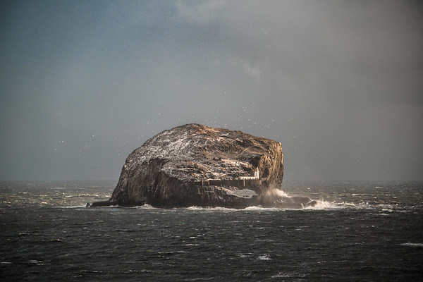 Sea Snow - Bass Rock, Scotland