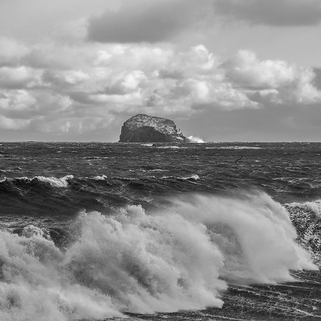 Bass Crash -  Bass Rock, Scotland