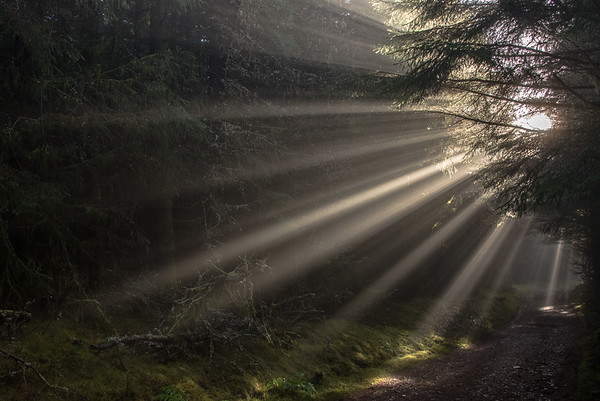 Glentress Beams - Tweed Valley, Scotland