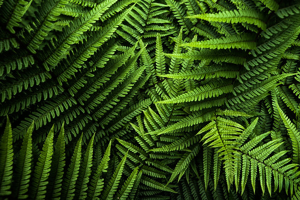 Find Form in the Ferns - Glentress Forest, Scotland