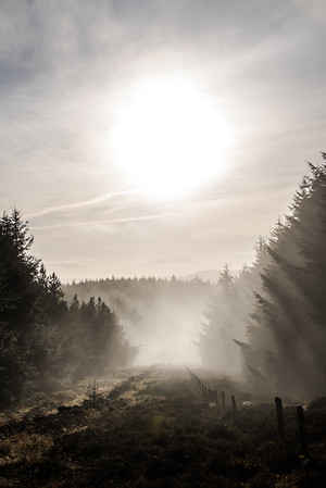 Dawn Mist - Glentress Forest, Scotland