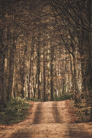 Autumn Path -  East Lothian, Scotland