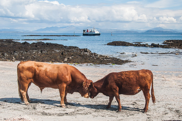 CowMac - Isle of Eigg, Scotland