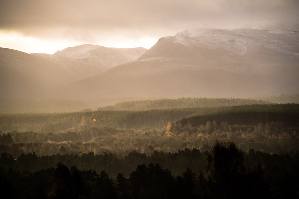 Abernethy Autumn -  Cairngorm National Park, Scotland