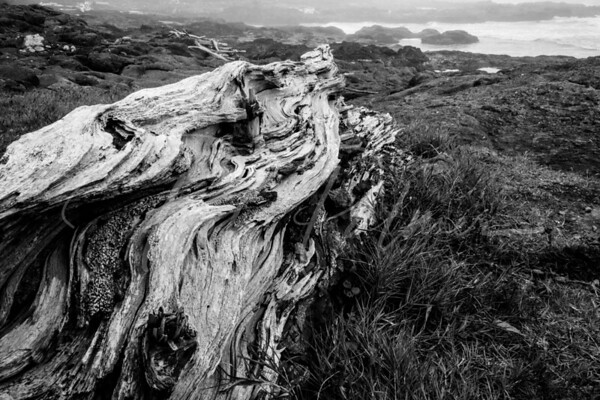 Driftwood on the Oregon Coast, Black and White