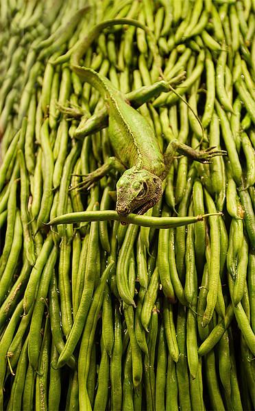 Green Bean Lizard<br /> Pike Place Market<br /> Seattle, Washington