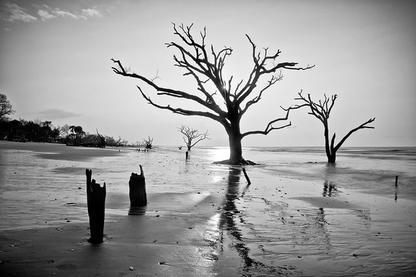 """Monsters on the Beach"" - Botany Bay, Edisto Island   Recommended Print sizes*:  4x6  