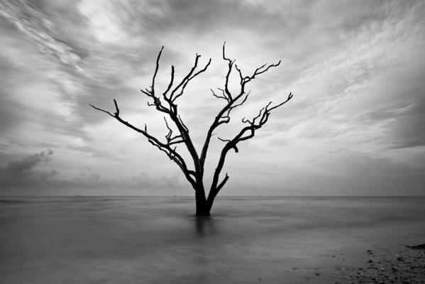 """""""Rush"""" - Botany Bay, Edisto Island   Recommended Print sizes*:  4x6  