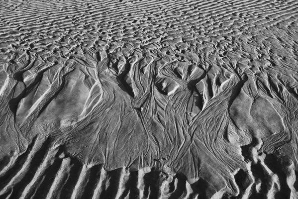 """Trees in the Sand"" - Myrtle Beach, South Carolina   Recommended Print sizes*:  4x6  
