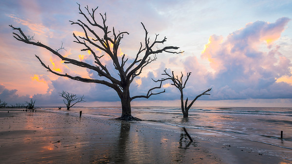 """Nature's Skeleton"" - Botany Bay, Edisto Island   Recommended Print sizes*:  5x10  
