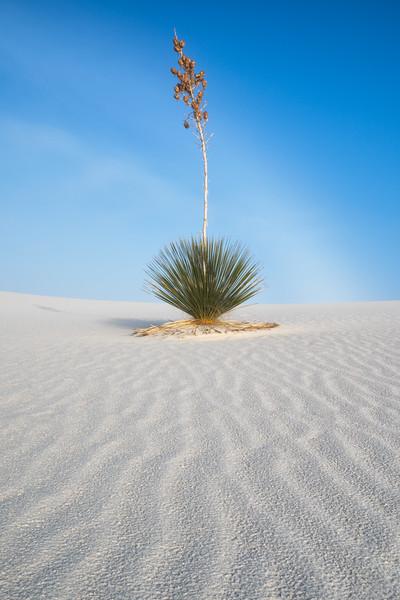 """Yucca"""