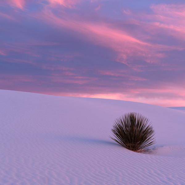 """Yucca Sunrise"""