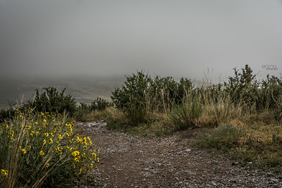 Fog Setting in on the Open Space