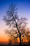 Sunset Tree Orange and Blue