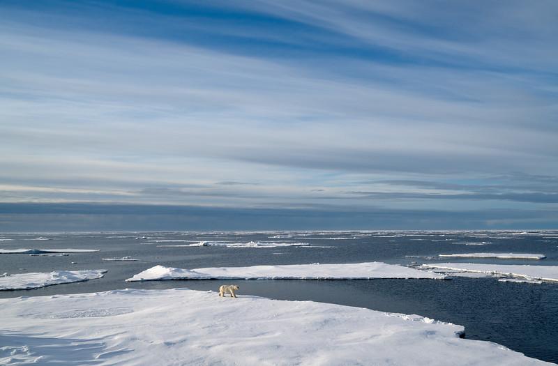 """""""Polar Bear Ice"""""""