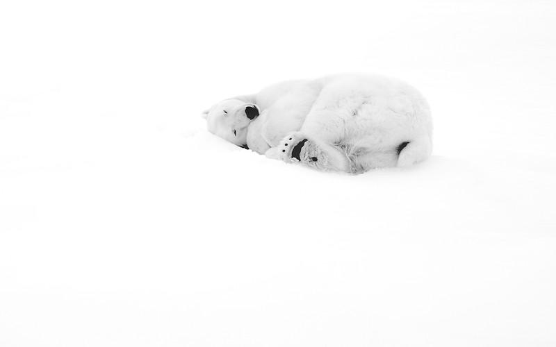 """Polar Bear #3"""
