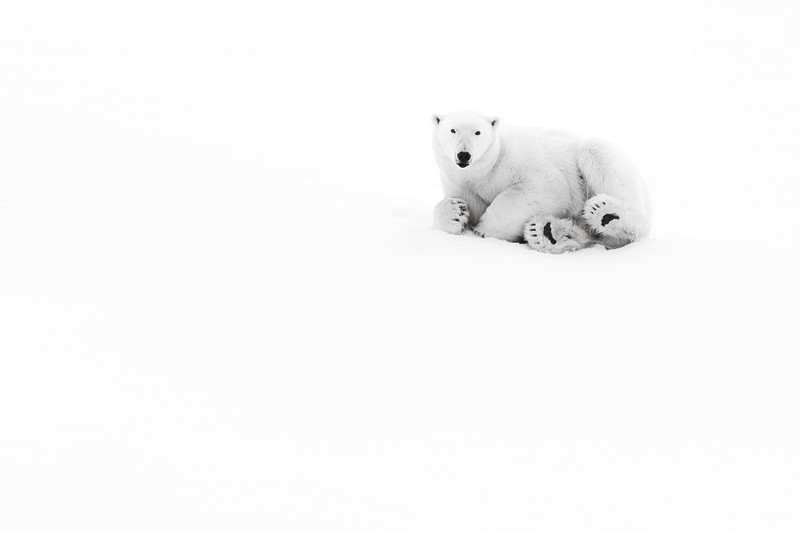 """Polar Bear #2"""