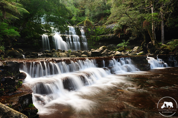 Cool Flow - No matter how often you return to Liffey falls, they are always spectacular. On this late autumn visit, there had been a fair bit of rain and the falls were flowing quite strongly.
