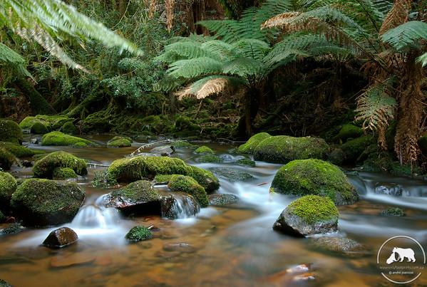 Creek in the Blue Tiers, Tasmania