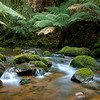 Creek in the Blue Tiers, Tasmania