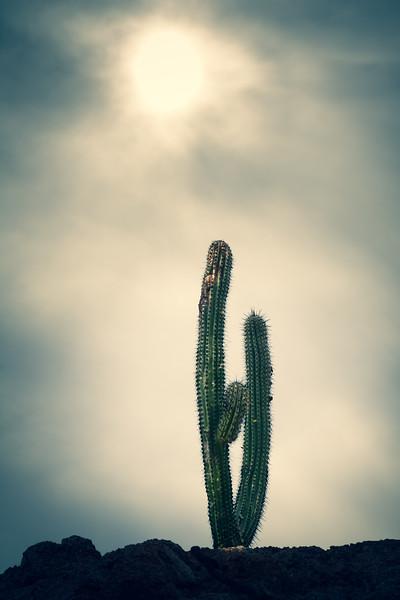 Cabo Shoreline Cactus, Cross Process