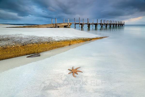 Quindalup Starfish