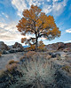 A solitary Cottonwood Tree during sunset in the Alabama Hills of the Eastern Sierra Mountains<br /> California.<br /> <br /> Photo by Ron Bernstein 11/24/11 at 4:23:16 PM with a NIKON D3 set to ISO of 200, shutter speed of 1/25 at f/18.