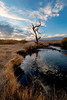 Dawn on the Owens River <br /> near Bishop, California
